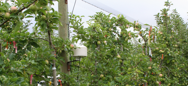Monitoring of chill in Cripps Pink apple orchard
