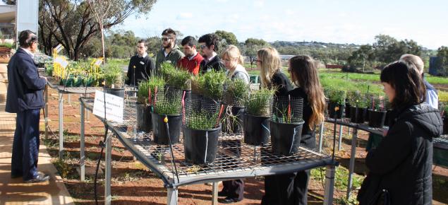 Graduate program participants inspect a range of trial crops as part of a regional tour