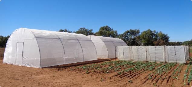 Trial set-up with insect exclusion tents