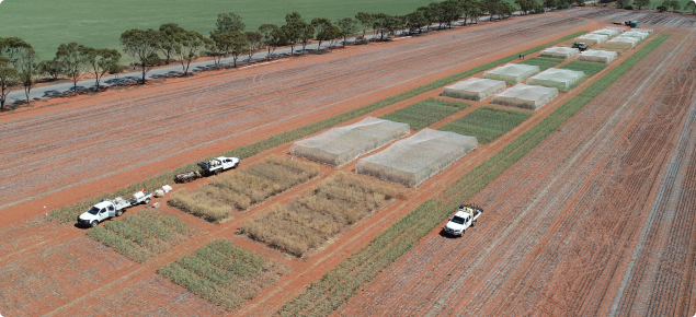 Very early sown canola variety trial at Mullewa 2019, harvest TOS 1