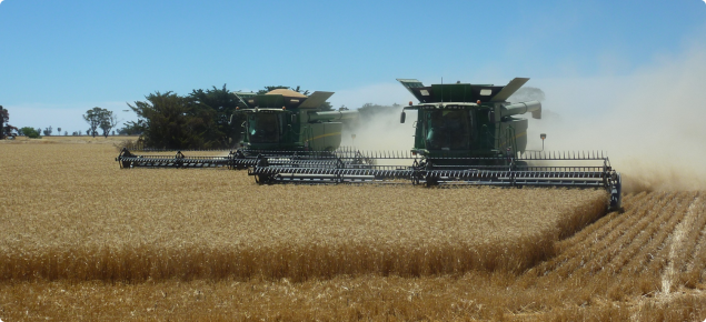 two headers harvesting side by side