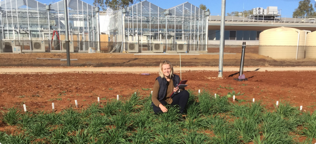 Georgia Trainor surveys a barley phenology trial at the department's new Northam Grains Research Facilities