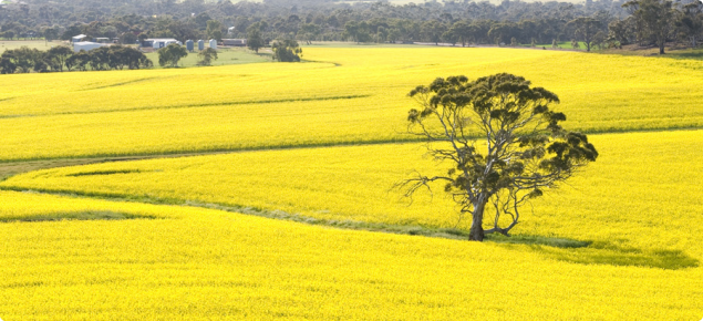 Western Australian Grains Industry Agriculture And Food
