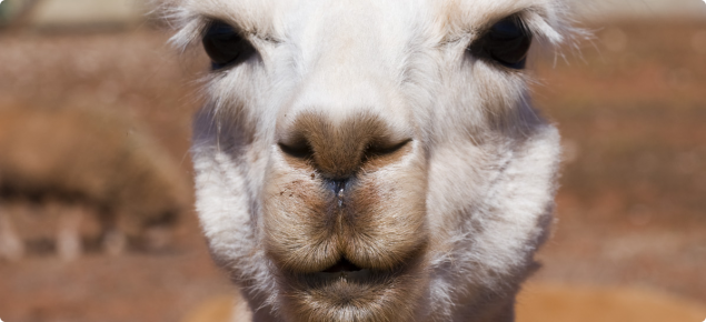 Alpaca is an animal which does not require inspection for species confirmationies for