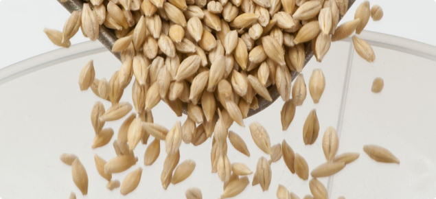 Harvested barley grain being tested for quality attributes