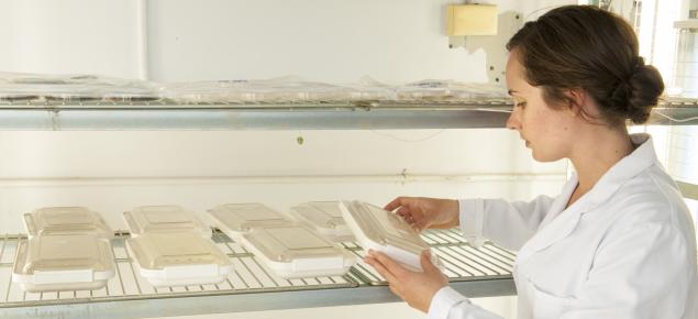 Plant pathology culture samples