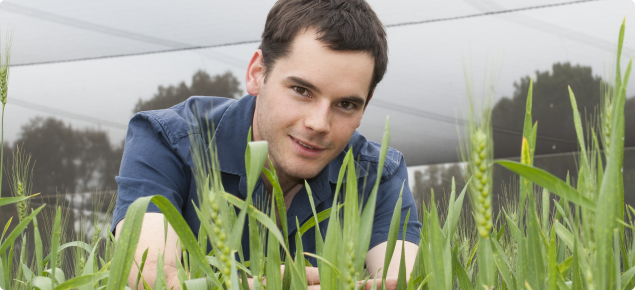 Research Officer Brenton Leske examining wheat at a DAFWA research facility