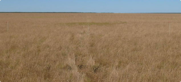 Marine couch pasture, Roebuck land system