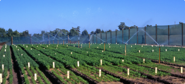 Irrigation research at Medina Research Station, Western Australia