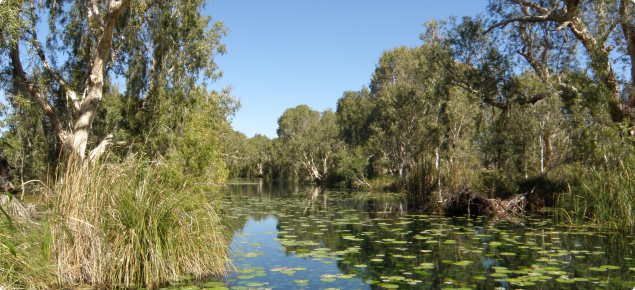 Photograph of a Millstream pond with healthy vegetation.