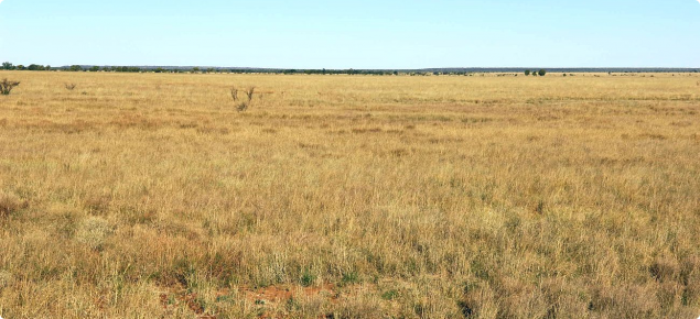 Photograph of Mitchell grass alluvial plains pasture in good condition on the Inverway land system
