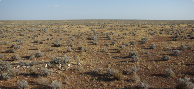 Pearl bluebush low shrubland dominated by pearl bluebush and speargrass, Moonera land system