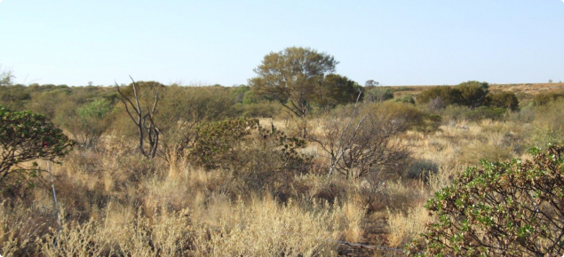 Mulga Short Grass Forb pasture in the Ullawarra land system
