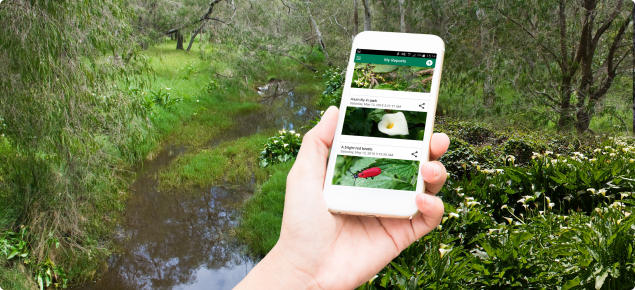 Report weeds with MyPestGuide™ Reporter