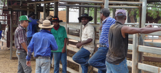 Group of indigenous cattleman at cattle yards