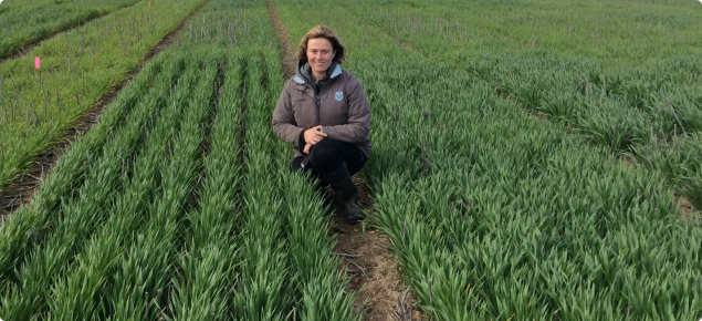 Development officer Georgie Trainor crouching in a trial of barley.