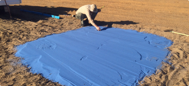 DPIRD officer in a paddock with a large squar of blue sand spread on the ground.