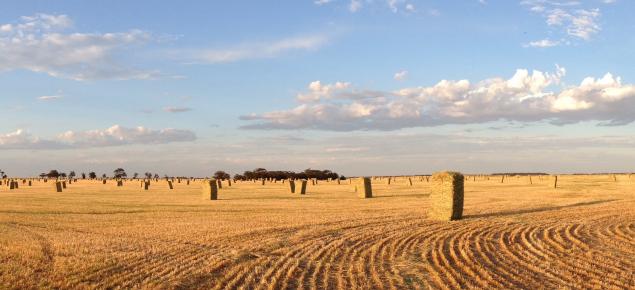 Export oaten hay baled in broadacre paddock
