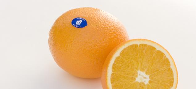 Healthy Western Australian orange