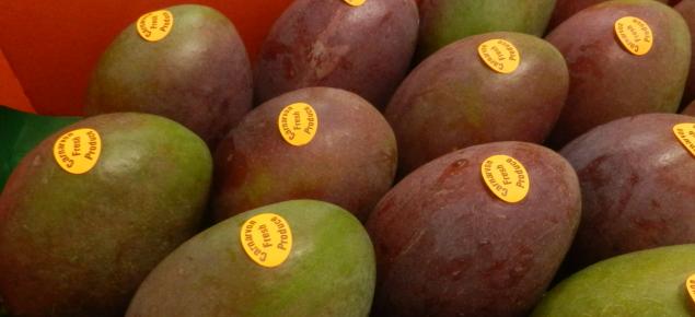 Keat mangoes grown in Carnarvon