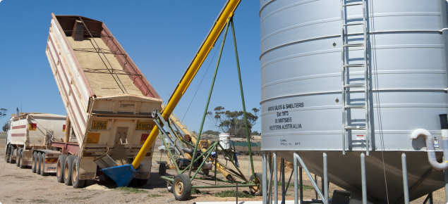 Grain truck unloading oats through an auger into a silo for feed use