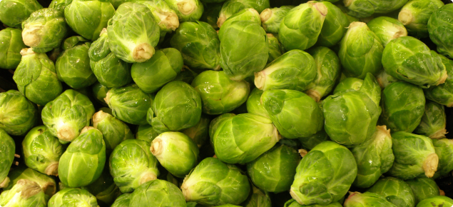 how to grow brussel sprouts youtube