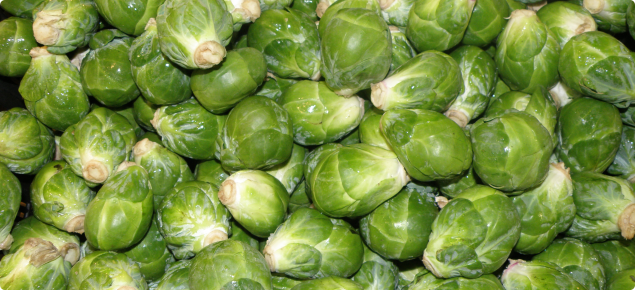 Brussels sprouts ready for sale