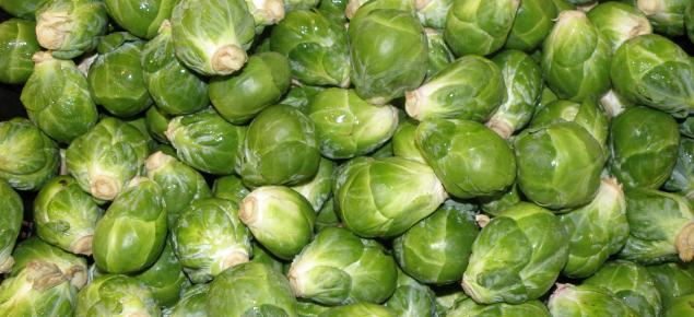 Postharvest handling of Brassica vegetables | Agriculture