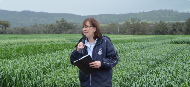 Pamela Zwer, oat breeder, outlining the benefits of Williams in front of the trial plots at York in September 2013