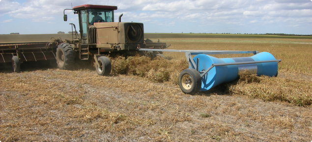 Rolling swaths of semi leafless peas