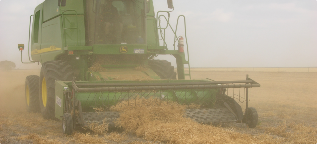Harvesting field pea windrows
