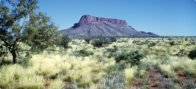 Photograph of a pilbara pastoral area
