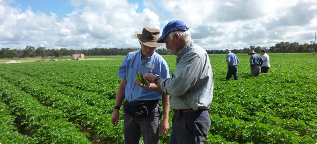 DAFWA staff and growers inspect a seed potato crop