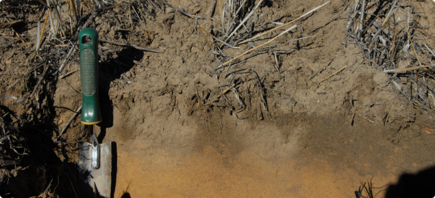 Preferential wetting up of water repellent soil below previous years standing stubble