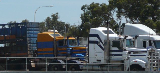 Trucks about to load cattle at a saleyard ramp