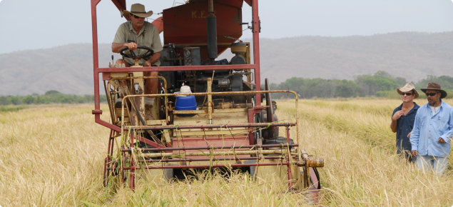 Harvesting rice trial at Frank Wise Institute