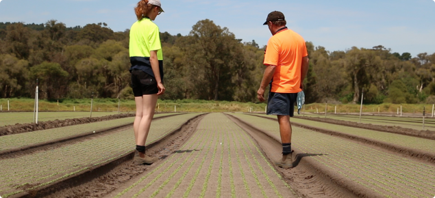 Two horticultural workers inspect a newly sown lettuce crop