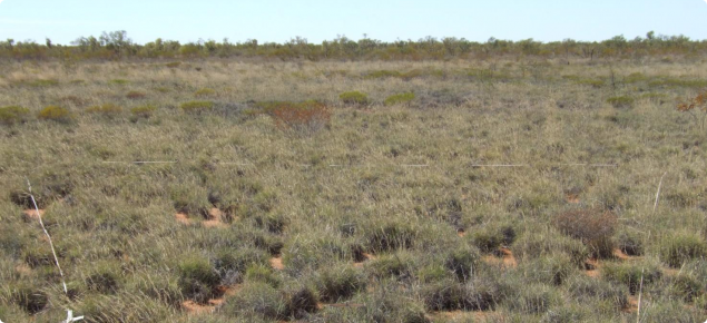 Soft Spinifex pastures in the Uaroo land system