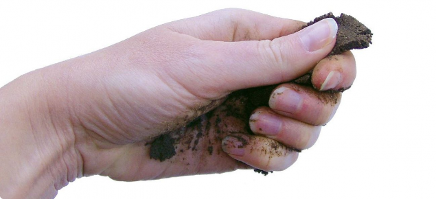 Photograph of hand extruding a soil ribbon to estimate a texture class