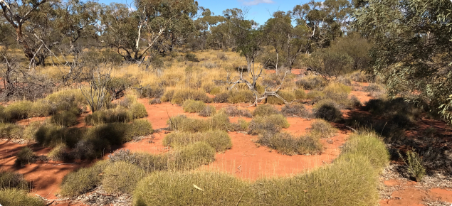 Spinifex country