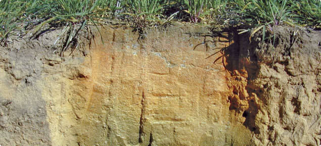 Soil profile at Tammin, stained with universal pH indicator showing an acidic subsurface layer stained orange, which prevents root access to soil with suitable pH below.