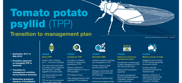 Tomato potato psyllid Transition to management plan overview