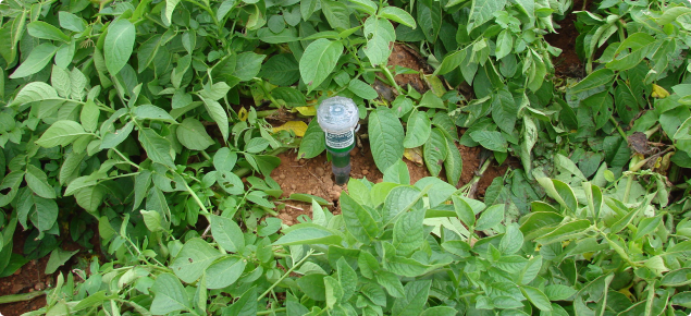 Tensiometer guage installed in a potato crop