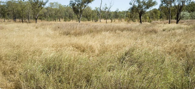 Photograph of Tippera tall grass plain pasture in fair condition in the Kimberley
