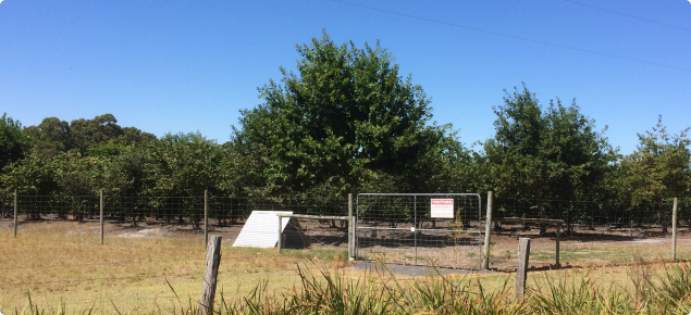 Truffle orchard with secure perimeter fence, closed gate and biosecurity sign