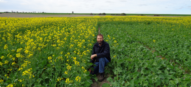 DAFWA researcher Martin Harries at a trial at Wongan Hills looking at sowing times for canola; March sown plots (left) and mid-April sown plots (right), photo taken July 5th.
