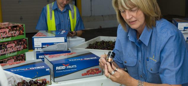 Quarantine WA staff inspecting cherries at the Canning Vale Market