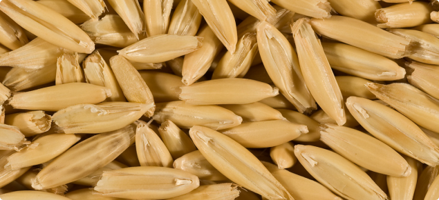 Bright, plump oat grain