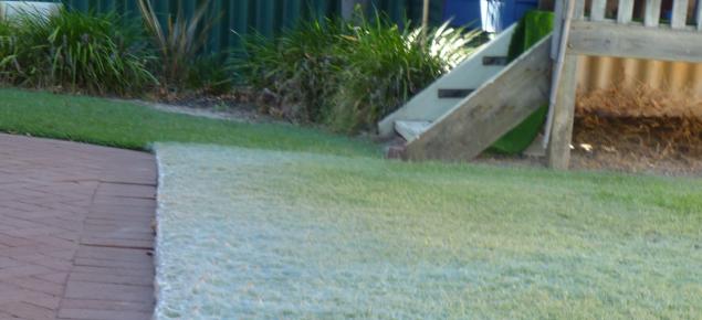 Webbing on kikuyu lawn caused by a grass webbing mite, Oligonychus araneum