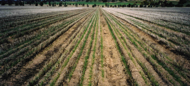 Seed rows on raised beds near Woodanilling